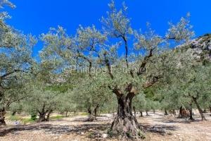 IMG_16075323_drome (26)  buis les baronnies (parc naturel region