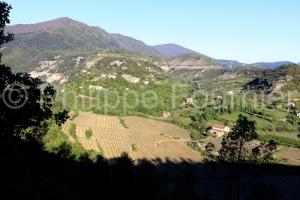IMG_17041970_Ardèche (07)  Naves Les vignes au printemps