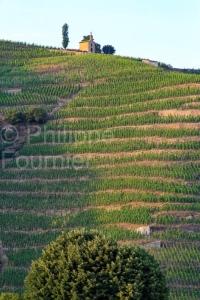 IMG_16076038_drome (26)  tain l'hermitage paysage vins des côte