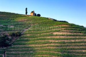 IMG_16076039_drome (26)  tain l'hermitage paysage vins des côte