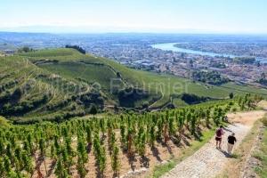 IMG_18093395_DROME (26)  TAIN L'HERMITAGE PAYSAGE VINS DES CôTE