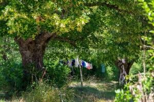 IMG_1907051480_Drôme (26)  Lachau Parc Naturel Régional des Ba