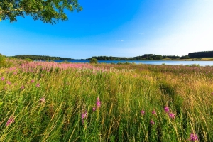 IMG_15070365_ARDECHE (07)  Saint-Agreve Parc Naturel Régional d