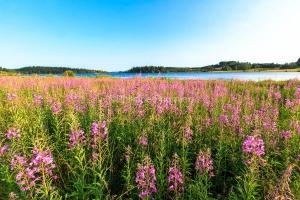 IMG_15070402_ARDECHE (07)  Saint-Agreve Parc Naturel Régional d