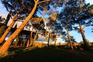 IMG_1112107_lourmarin vue sous les pins parc naturel regional de
