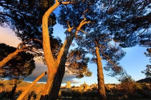 IMG_1112109_lourmarin_vue_sous_les_pins_parc_naturel_regional_de