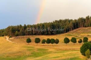 IMG_1907305653_Lozère (48)  Lachamp paysage Margeride, chemin c