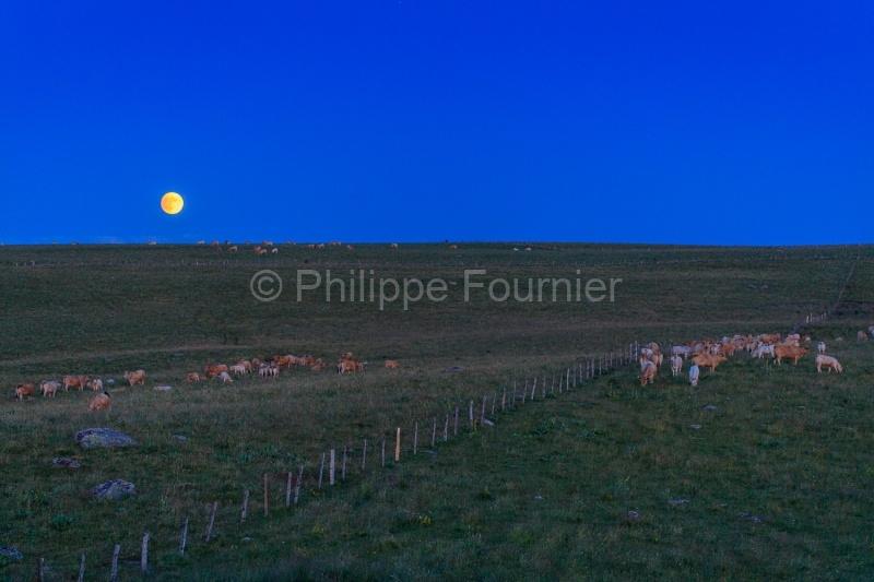 IMG_19077350_Lozère (48)  Marchastel Monts d'Aubrac lever de Lu