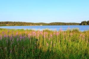 IMG_15070455_ARDECHE (07)  Saint-Agreve Parc Naturel Régional d