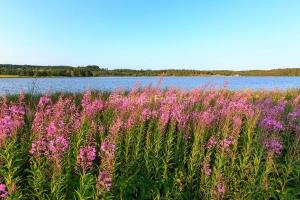IMG_15070460_ARDECHE (07)  Saint-Agreve Parc Naturel Régional d