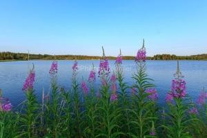 IMG_15070472_ARDECHE (07)  Saint-Agreve Parc Naturel Régional d