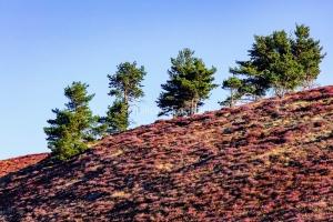 IMG_17085382_Ardèche (07)  laval d'aurelle parc naturel région