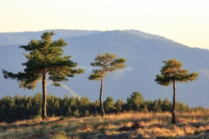 IMG_17085591_Ardèche (07)  montselgues parc naturel régional d