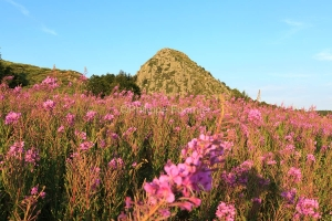 IMG_15070936_Ardeche (07)  sainte eulalie (parc naturel regional