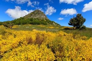 IMG_16064713_Genet- Mont-Gerbier-de-Jonc paysage Sainte-Eulalie
