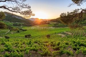 IMG_1907072452_.dngvaucluse (84)  la roque alric le vignoble, be
