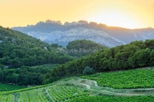 IMG_1907072476_vaucluse (84)  la roque alric le vignoble, beaume
