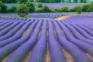 IMG_18060441_drome (26)  bellecombe tarendol drôme provençale