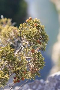 IMG_17096384_Ardèche (07)  saint remeze réserve naturelle des