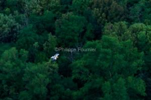 IMG_19054518_Ardèche (07)  Vallon Pont d'Arc Réserve Naturelle