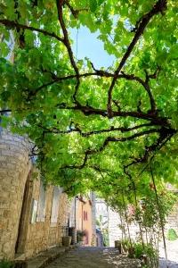 IMG_1906241330_Lozère (48)  Sainte Enimie Gorges du Tarn une vi