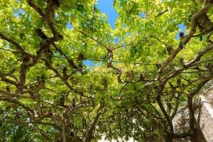 IMG_1909121136_Vaucluse (84)  Séguret Plus beaux villages de Fr