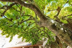 IMG_1909121142_Vaucluse (84)  Séguret Plus beaux villages de Fr