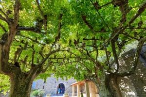 IMG_1909121269_Vaucluse (84)  Séguret Plus beaux villages de Fr
