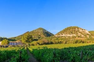 IMG_1909121372_Vaucluse (84)  Séguret Plus beaux villages de Fr