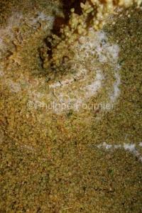 IMG_16091540_ARDECHE (07)  BOURG SAINT ANDEOL NOTRE DAME DE COUS