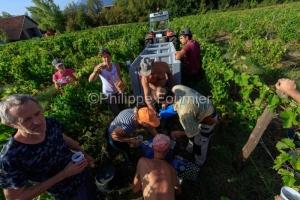 IMG_18094240_DROME (26)  CHATILLON EN DIOIS PARC NATUREL REGIONA