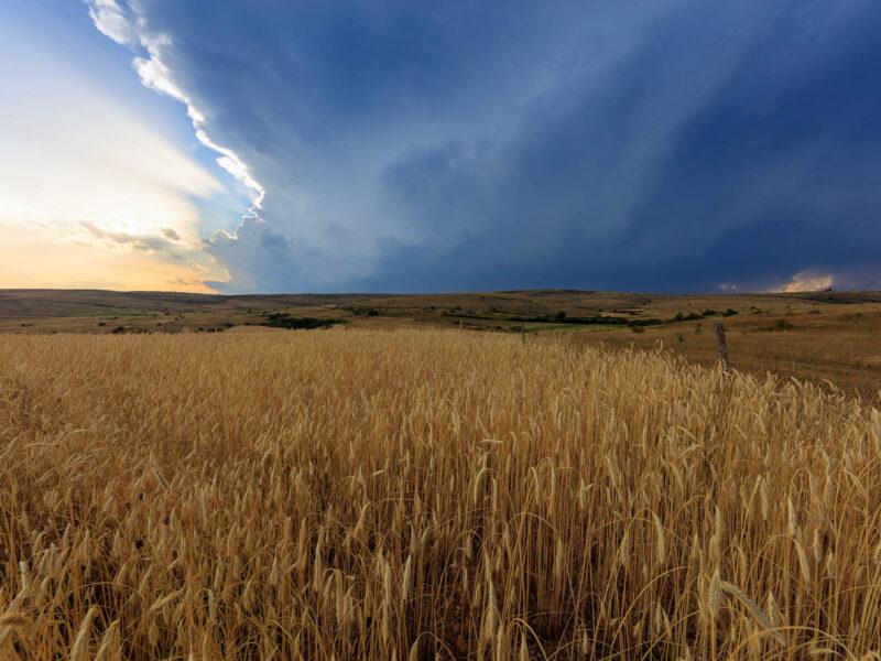 IMG_1907211913_Lozère (48) Hures la Parade Causse Méjean, champ de blès, ciel d'orage en fin de journée