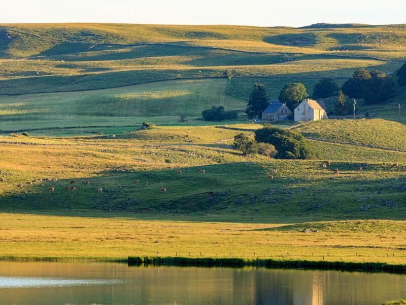 IMG_19077032_Lozère (48) Marchastel Monts d'Aubrac vache Aubrac lac de Born_