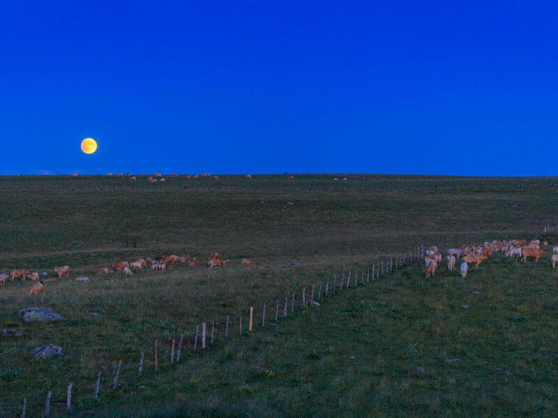 IMG_19077350_Lozère (48) Marchastel Monts d'Aubrac lever de Lune_