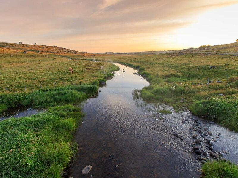 IMG_19077941_Lozère (48) Marchastel Monts d'Aubrac lever de soleil vache Race Aubrac la rivière du Bès_